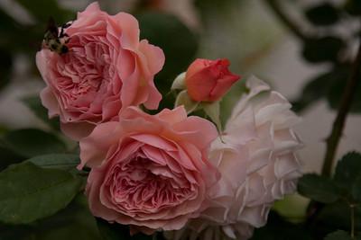garden_May01-6190