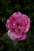 garden_May07-6298