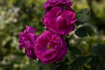 garden_May02-6260