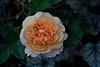 garden_May07-6331