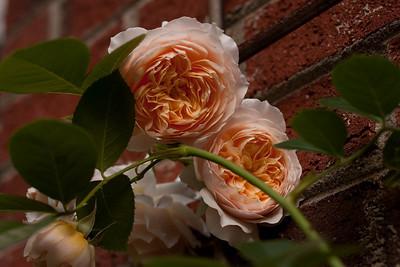 garden_May07-6347