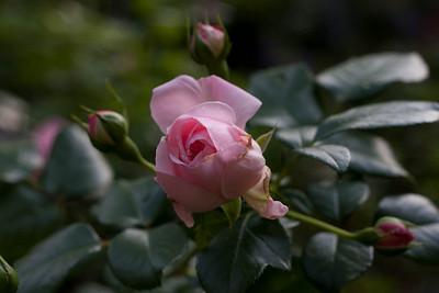 garden_May07-6342
