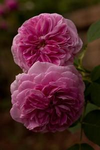 garden_May07-6292