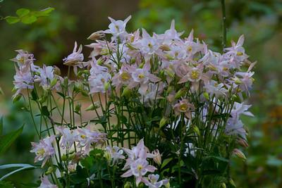 Garden Late April 2013