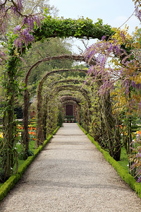 Early Wisteria Walk