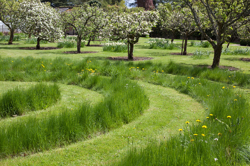 the orchard at Arley Arboretum with grass maze