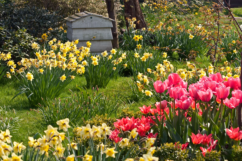 Spring bulbs at Cooper's Millennium Garden, Staffs