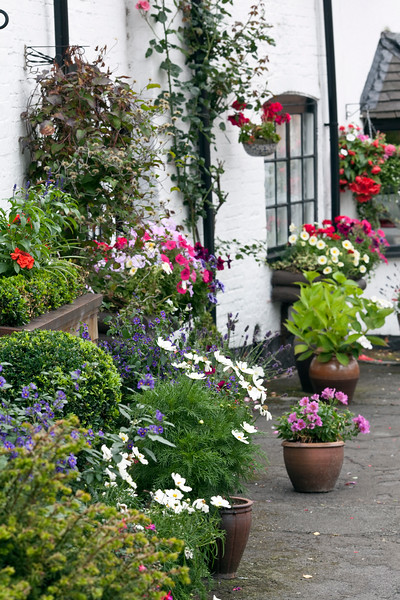 bedding plants in pots
