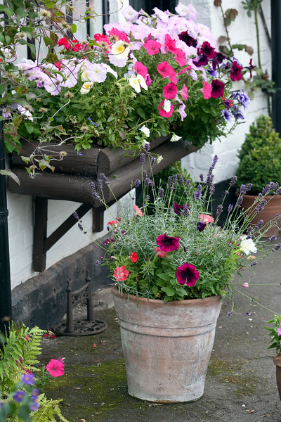 petunias in window box and pot