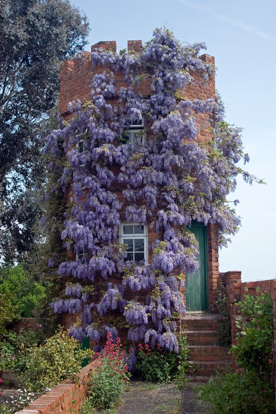WISTERIA CLAD TOWER AT STONE HOUSE COTTAGE GARDEN, MAY