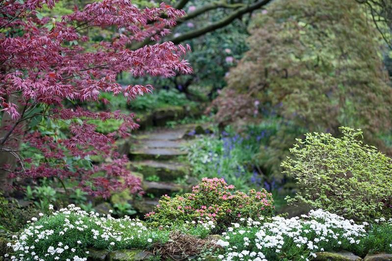 Spring in the sunken garden at Winterbourne Botanic Garden