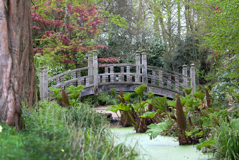 Spring in the bog garden at Winterbourne Botanic Garden