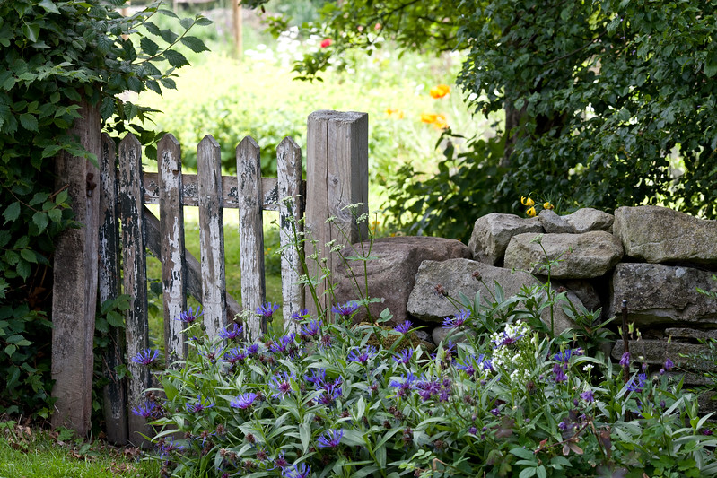 view of garden gate and centaurea montana