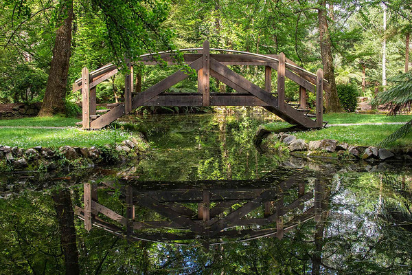 George Tindale Garden 11