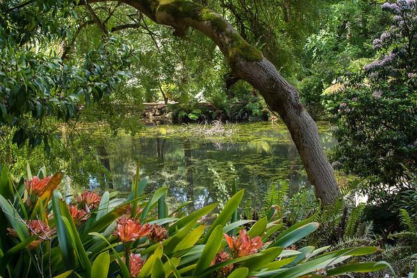 George Tindale Garden 06