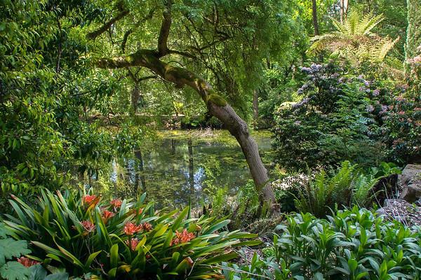 George Tindale Garden 05