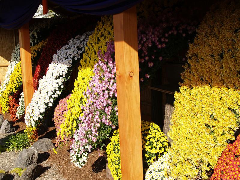 Display of smaller blooms