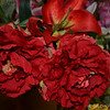"""March 28, 2015<br /> <br /> """"SCARLET CARNATIONS""""<br /> <br /> If I didn't know any better, I'd think these were authentic flowers and not artificial:). I included these in my """"Mother's Day"""" 2015 collage that was my Daily Photo on Mother's Day, Sunday, May 10, 2015.  <br /> <br /> View the collage here:<br /> <br /> <a href=""""http://godschild.smugmug.com/DailyPhotos/Daily-Dose-of-One-A-Day-2014/i-TMTsrWL/A"""">http://godschild.smugmug.com/DailyPhotos/Daily-Dose-of-One-A-Day-2014/i-TMTsrWL/A</a><br /> <br /> Margaret's Garden, Gifts, and Florist<br /> Belzoni, MS<br /> <br /> My Homepage:  <a href=""""http://www.Godschild.SmugMug.com"""">http://www.Godschild.SmugMug.com</a>"""