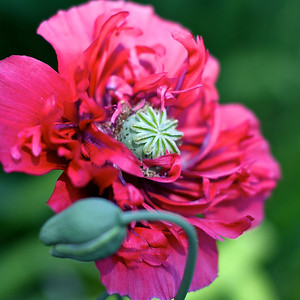 Some of my blooms from the garden today, July 5 2011