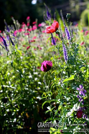 In the garden 7/3/11
