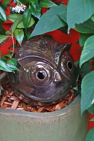 "My garden today, July 22 2012-MY 12"" VIETNAMESE POTTERY OWL IN THE JASMINE PLANT"