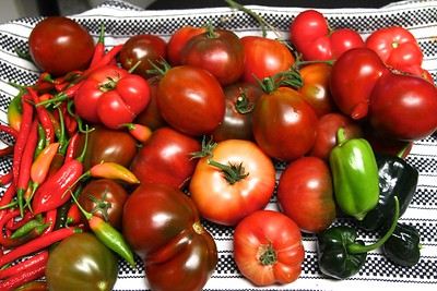 "2012 HEIRLOOM TOMATO HARVEST The boy tomato does have a sister from the same family ""tree""....(bottom center of photo"