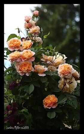 Garden June 4, 2009