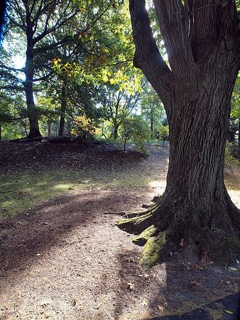 NYBG Trees