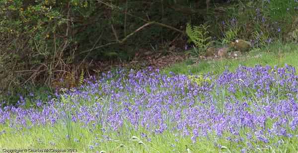 Crarea Garden, Loch Fyne side
