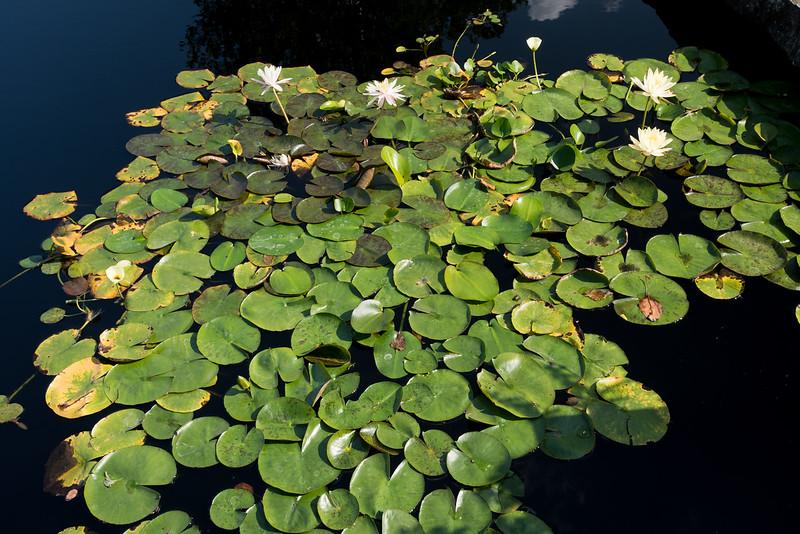 A Very Still Reflecting Pond
