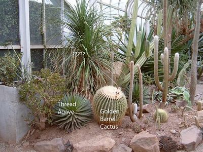 Duke Desert Garden
