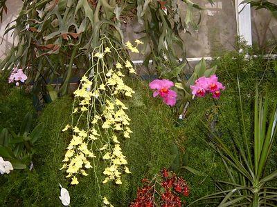 Duke Edwardian Garden