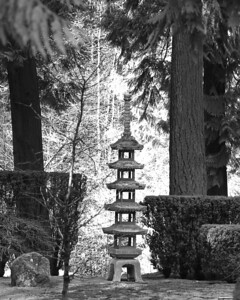 Portland Japanese Garden and home garden March 15, 2014