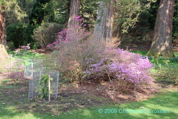 Benmore Garden, Cowal Penisular