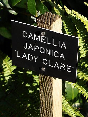 Savill Garden (2010-01-01)