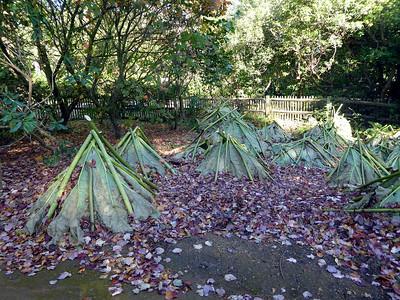 Savill Garden (2014-10-28)