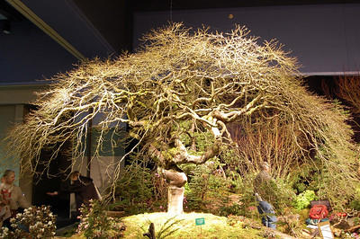 Seattle Flower & Garden Show