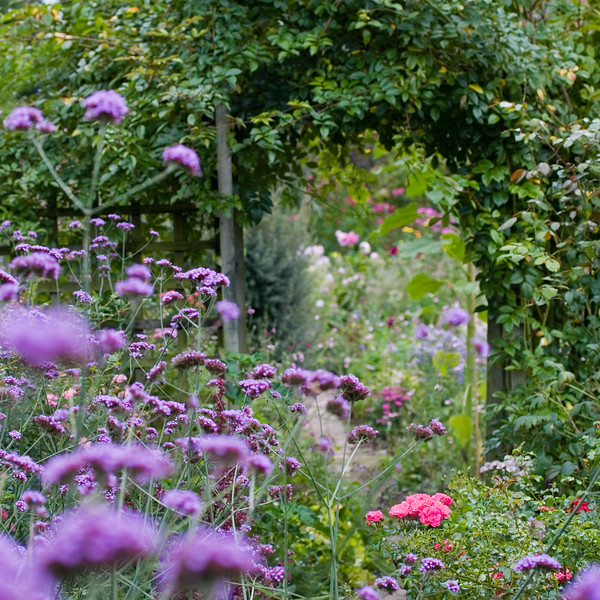 SOFT FOCUS VIEW THROUGH HEDGE TO COTTAGE GARDEN