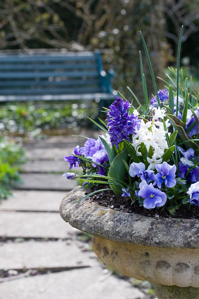 CLASSICAL URN PLANTED WITH SPRING FLOWERS