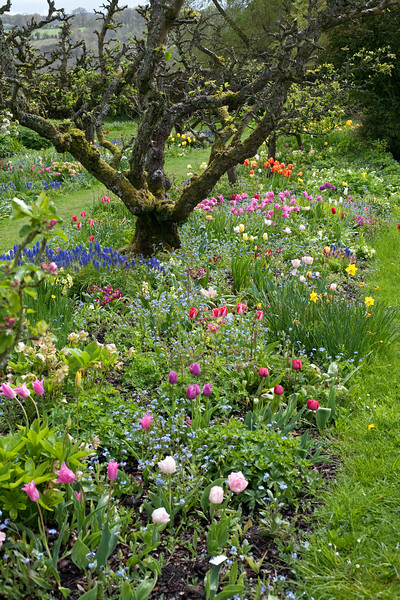 spring at Hergest Croft