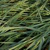 Grass curves 5