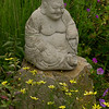 Buddha and coreopsis