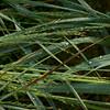 Grass curves 3