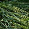 Grass curves 4