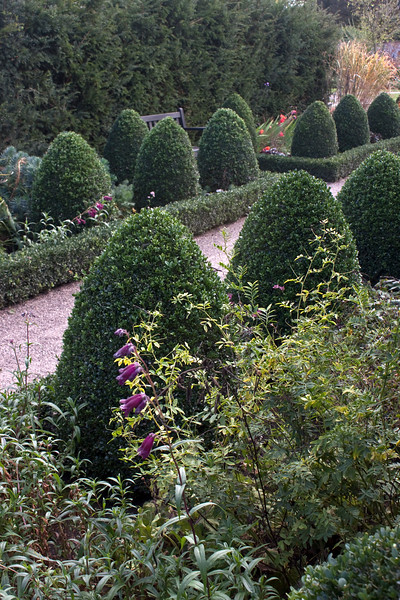 Hampton Court Garden, topiary
