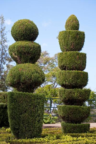 topiary at Jardim Botanico, Funchal, Madeira