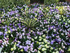 WRAL Azalea Gardens