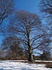 Winter February 1