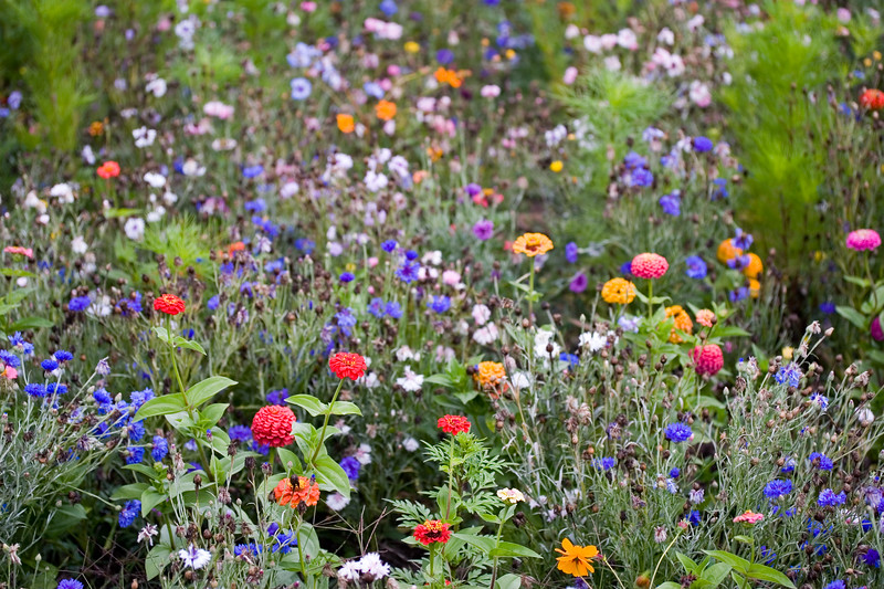 FRENCH WILDFLOWER MEADOW