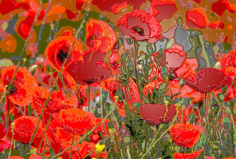 PAPAVER RHOEAS, WILD POPPIES, WITH PLASTIC WRAP FILTER EFFECT, MANIPULATED